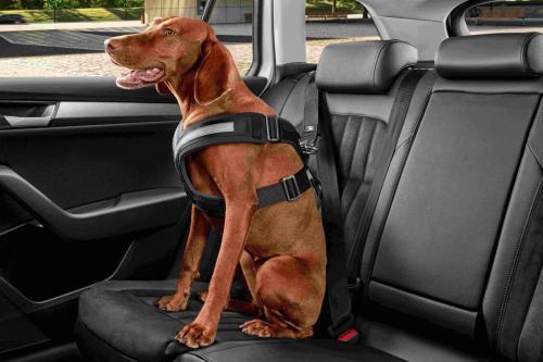 Náhled Bezpečnostní pás pro psy vel. S, M, L, XL